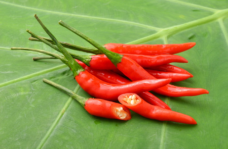 bush pepper: ripe red  hot chili peppers on a leaf Stock Photo