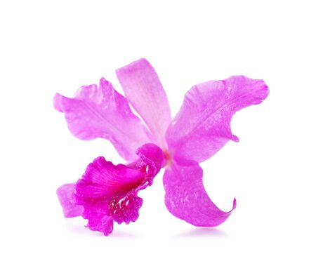 beautiful Purple orchids on white background photo