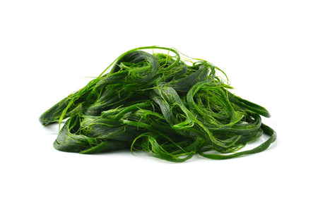 photosynthetic: Fresh - water algae ready is used to make food. Stock Photo