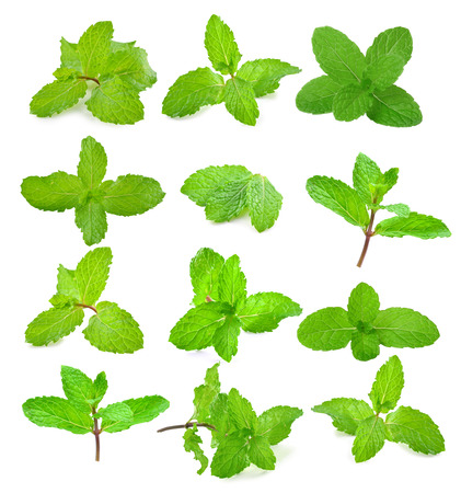 mint leaves: Fresh mint on white background