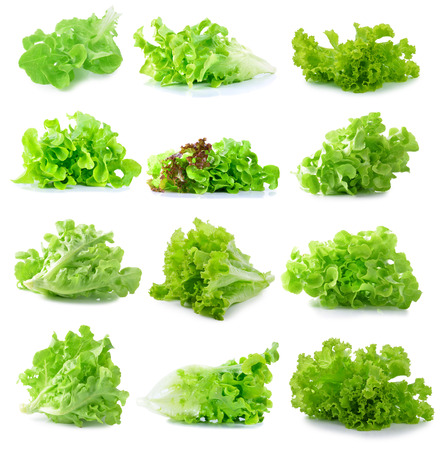 lettuce: fresh  lettuce leaves isolated on white