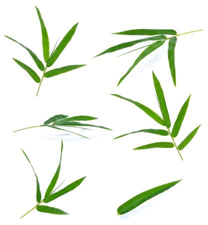 bambou: Vert feuilles de bambou sur un fond blanc