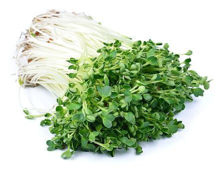 berro: brote kaiware, vegetal japonés o el berro en el fondo blanco