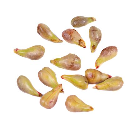 jhy: grape seeds on white background