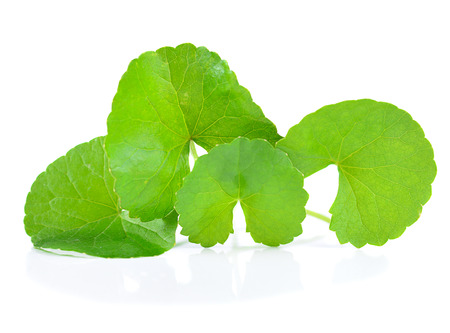 Centella asiatica isolated on white background