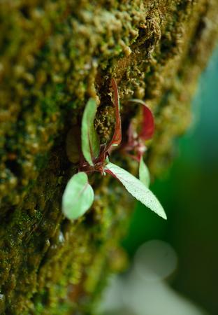 closeup photo of green moss