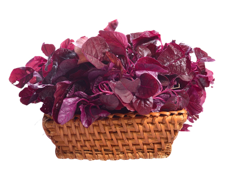 Fresh red amaranth or red spinach over white background