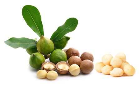 Macadamia noot op witte achtergrond wordt geïsoleerd die. Stockfoto