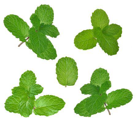 Fresh mint on white background