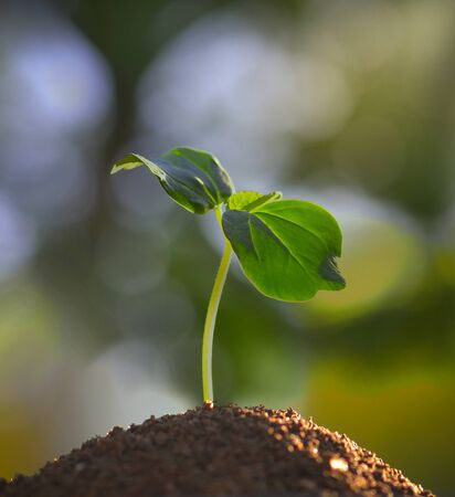 Plant sprouting from the ground with vivid green bokeh background 写真素材