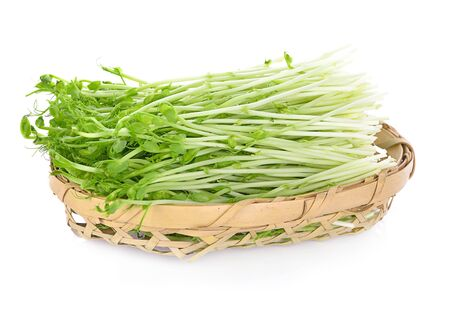 Fresh sprouts isolated on white background.