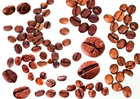coffeetree: Fresh coffee
