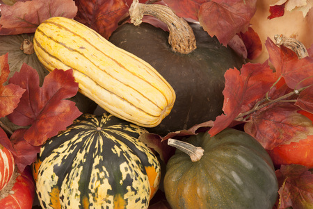yellows: Colorful fall squash yellows, greens, and orange