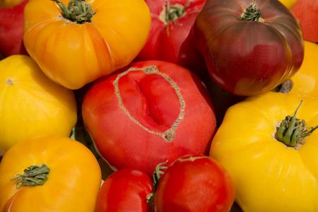 heirloom: farm garden fresh healthy organic heirloom tomatoes