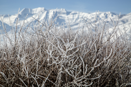 snowscape: Frosted bushes in beautiful winter mountain snowscape