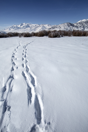wasatch: Tracks in beautiful winter snow mountain landscape