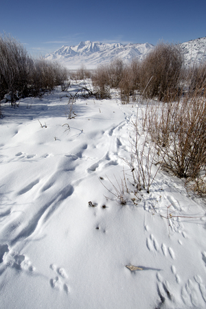 wasatch: Winter landscape Rocky Mountains Utah animal tracks Stock Photo