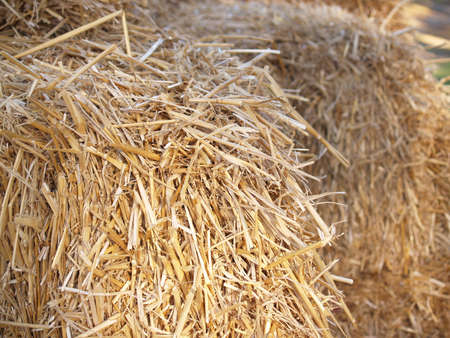 bail: Close up of brown hay