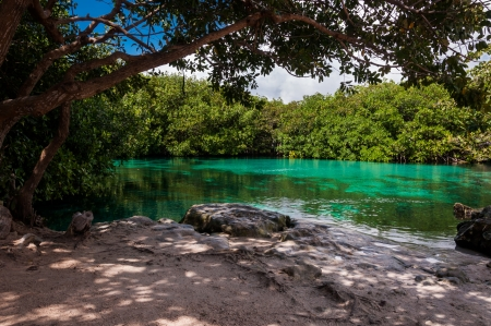 Casa Cenote in Tulum Mexico on Riviera Maya Yucatan peninsula Quintana Roo. This is a natural limestone cave and a river who is connected to the sea and salty and fresh water mix in it. You can canoe, swin and even learn to dive here. Its beautiful. photo