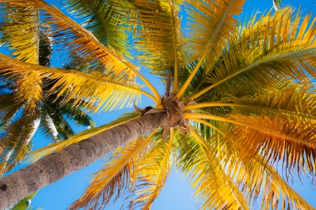 caribe: Palm tree ideal for relaxation under the shade on a sandy Caribbean beach Isla Mujeres Yucatan peninsula Mexico Caribe Mar Island of Women  This is paradise on earth  Stock Photo