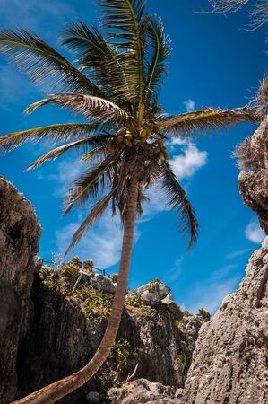Palm tree on a beach under the ruins in Tulum, Mexico taken while traveling around Yucatan Stock Photo - 13792036