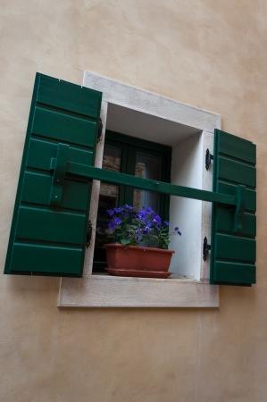 Window with flower and shutters in Groznjan, Istria, Croatia photo