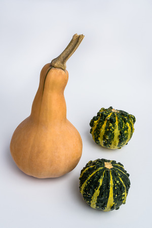 Butternut squash and two decorative pumpkins on white background