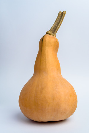 Butternut squash or pumpkin on white background
