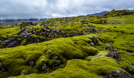 lava field: A vast lava field with green moss in Iceland