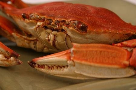 Boiled Crab Closeup