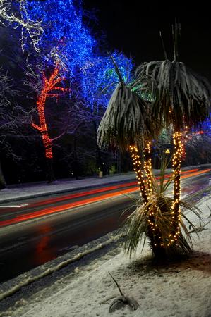 electric avenue: Row of tree and holiday blue illumination
