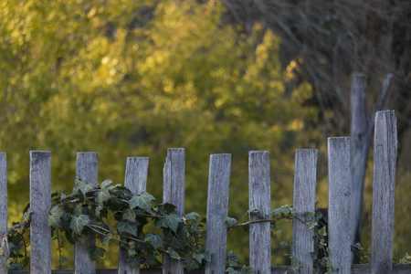 old wooden rural fence in the village, natural blurred background of yellow trees Фото со стока