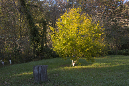 Autumn Landscape. Park in Autumn. Forest in Autumn. Lonely beautiful autumn tree. Old tree. Фото со стока