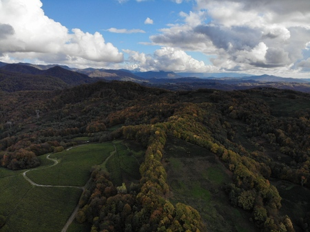 Drone areal view of the tea plantations in the mountains. Against the background of a blue sky. Autumn