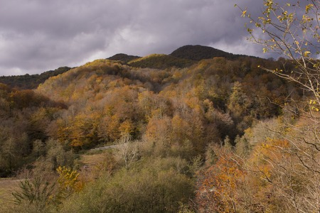 The fantastic view from mountain. The open area change colors in the fall season under the overcast sky.