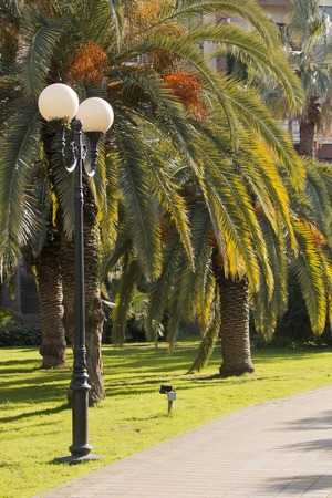 Palm trees in the city park at beautiful sunny day. Фото со стока