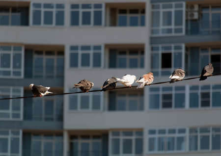 a group of pigeons sitting on the electric wire in the city on the background of the building