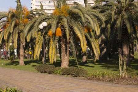 Palm trees in the city park at beautiful sunny day. blurred background Фото со стока