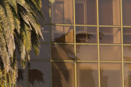 Green palm tree background and modern building