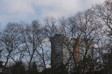 Urban landscape. Tree without leaves on the cloudy sky and town background