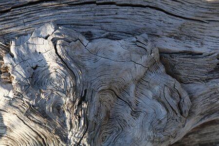 Pattern of tree trunk