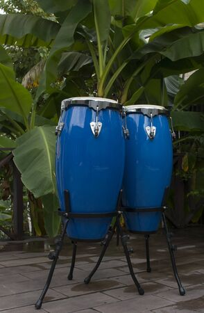 two blue congas on a background of palm trees Stock Photo