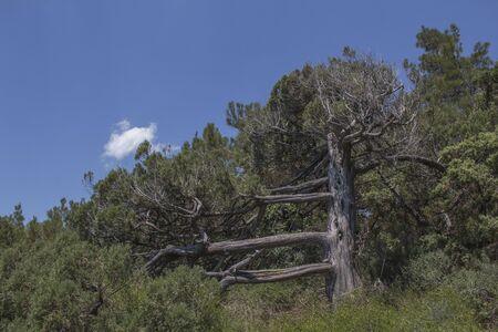 Beauty nature landscape with tree - pine, horizontal photo