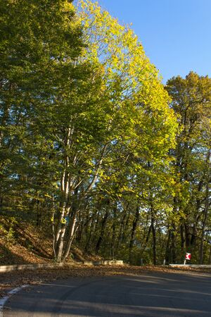 A winding road curves through autumn trees.