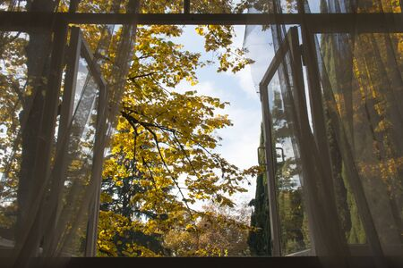 View of Autumn Garden and Tree from Vintage Wooden Window