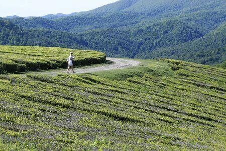 The girl walks in the tea farm,Young girls walk or play in the green tea farm. Happy girl in the tea plantation scene.