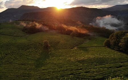 Amazing inspirational epic drone footage. Clouds of mist float over tea plantations against the backdrop of a magnificent sunset. Standard-Bild