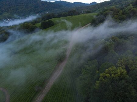 Amazing inspirational epic drone footage of deep and wild green pine forest high in mountains or european alps, protected national park or reserve.
