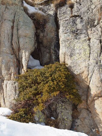 Ancient rock covered with moss and snow