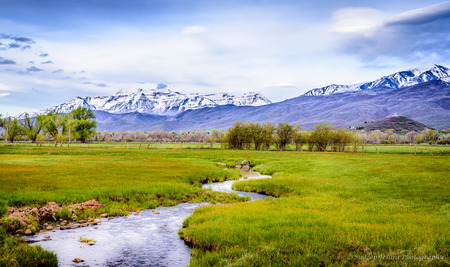 wasatch: Creek running through the lush fields and snow capped mountains in the backdrop, in Utah